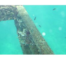 Barrier Reef Fish Photographic Print