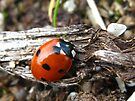 ladybug by millymuso