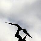 Frigate birds fighting by citrineblue
