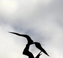 Frigate birds fighting by citrineblue