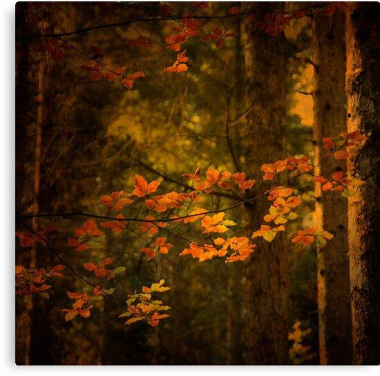 Spirit Fall by Philippe Sainte-Laudy