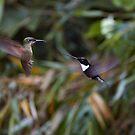 Hummingbird attack by citrineblue
