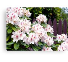 Pink Beauty in Spring Canvas Print