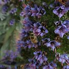 Bee On a Bush..Close up by judygal