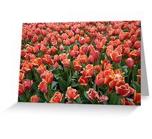 Tulips 1 Greeting Card