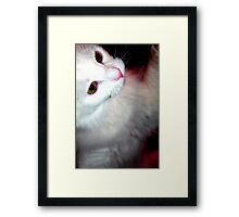 Kitty Play Framed Print