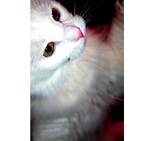 Kitty Play Photographic Print