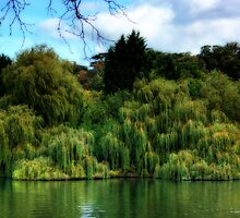 weeping willows by wendywoo1972