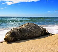 Seal by Julia Harwood