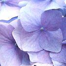 Purple Flowers by Jason Langer