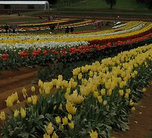 Rows Of Colour by judygal