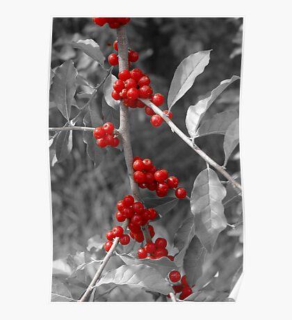 Wild berries... Poster