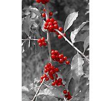 Wild berries... Photographic Print