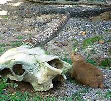 Skulls and Prairie Dogs by Amber Carwile