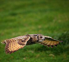 Rock Eagle Owl by Anne-Marie Bokslag