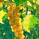 Glowing Grapes by H A Waring Johnson
