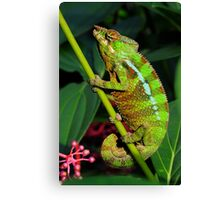 GREEN PANTHER Canvas Print