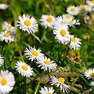 A Meadow Full Of Joy  by vbk70
