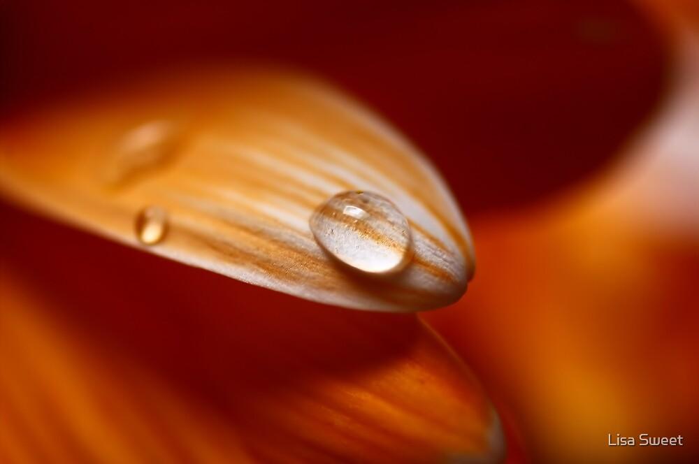 Drop of life by Lisa Sweet