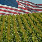 Corn field and United States Flag by H A Waring Johnson