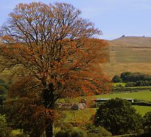 Dartmoor: Autumn Colours by Rob Parsons