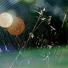 Colorful Spider Web by H A Waring Johnson