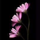 Pink Ballet by Nancy Polanski