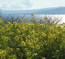 Yellow spring by Zeljka
