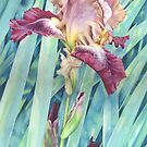 Bearded Iris by Helen Lush