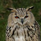 Portrait of a Siberian Eagle Owl by Anne-Marie Bokslag