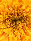 Yellow Marigold by Orest Macina