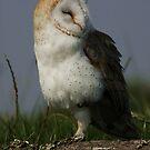 Portrait of a Barn Owl by Anne-Marie Bokslag