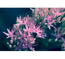 Pinks Photographic Print