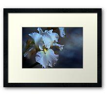 Blue bearded Iris in a cloudy sky Framed Print