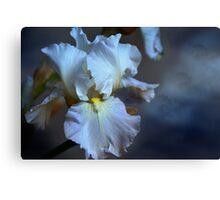 Blue bearded Iris in a cloudy sky Canvas Print