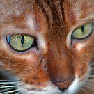 Diva green eyes by evilcat