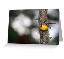 Goldenrod Crab Spider!  Greeting Card