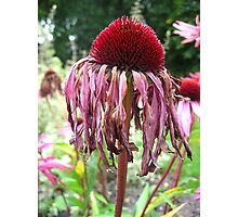 Withering Elegance Photographic Print