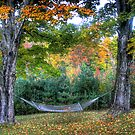 Hebron Hammock by Wayne King