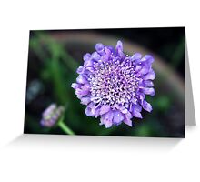 *'BUTTERFLY BLUE' PINCUSHION PLANT* Greeting Card
