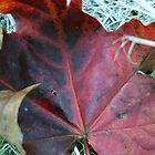 Autumn by -BlackRose-