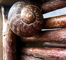 Snail  by Orla Cahill Photography