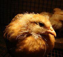 Sexy Chick by angelandspot