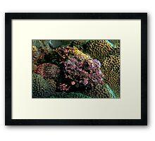 Rockfish Framed Print