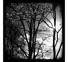 Trees in the Afternoon Sun - TTV Photographic Print