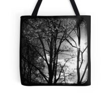 Trees in the Afternoon Sun - TTV Tote Bag