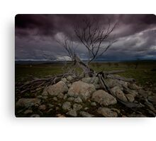 A Stormy Tree Canvas Print