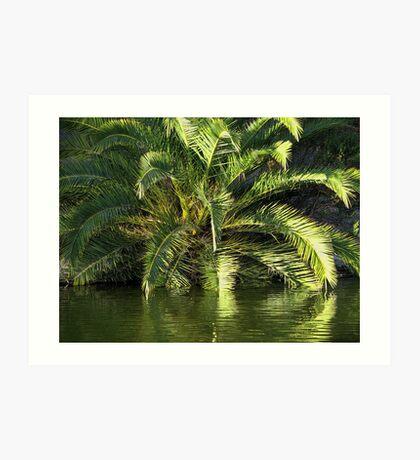 Reflected Palm Art Print