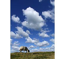 Doesn't that cloud look like a Sheep? Photographic Print
