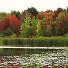 Fall in Michigan by Rodney Campbell